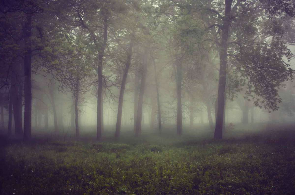 foggy-woods
