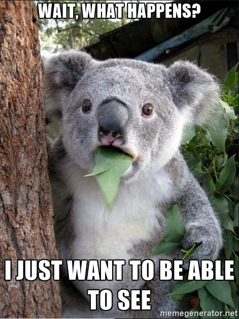 koala-wow-wait-what-happens-i-just-want-to-be-able-to-see.jpg